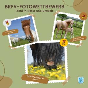 BRFV-Fotowettbewerb