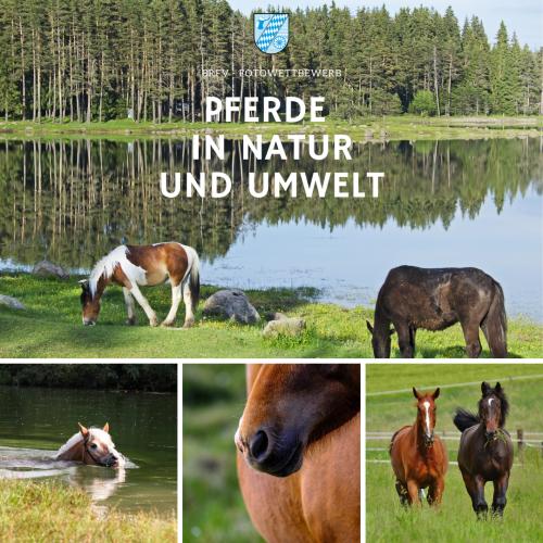 Foto-WB Pferde in Natur und Umwelt